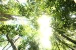 Sapi Island forest -- sabah_0216