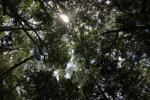 Sapi Island forest -- sabah_0217