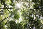 Sapi Island forest -- sabah_0218