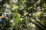 Sapi Island forest -- sabah_0220