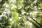 Sapi Island forest -- sabah_0221