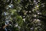 Sapi Island forest -- sabah_0222