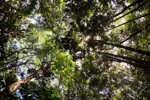 Sapi Island forest -- sabah_0224