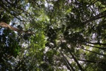 Sapi Island forest -- sabah_0225