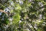 Sapi Island forest -- sabah_0226