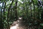 Sapi Island forest -- sabah_0227