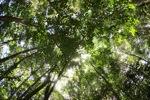 Sapi Island forest -- sabah_0229