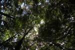 Sapi Island forest -- sabah_0230