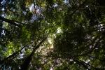 Sapi Island forest -- sabah_0231