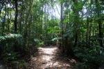 Sapi Island forest -- sabah_0232
