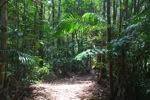 Sapi Island forest -- sabah_0233