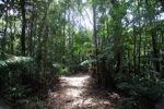 Sapi Island forest -- sabah_0234