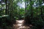 Sapi Island forest -- sabah_0235