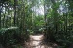 Sapi Island forest -- sabah_0236