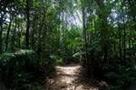 Sapi Island forest -- sabah_0237