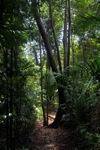 Sapi Island forest -- sabah_0241
