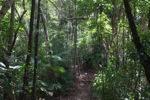 Sapi Island forest -- sabah_0245