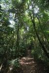 Sapi Island forest -- sabah_0247