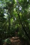 Sapi Island forest -- sabah_0248