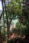 Sapi Island -- sabah_0280