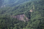 Deforestation -- sabah_0289