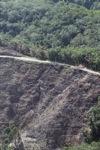 Deforestation -- sabah_0296