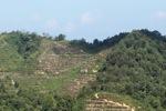 Deforestation in Malaysian Borneo -- sabah_0298