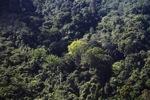 Borneo rainforest -- sabah_0299