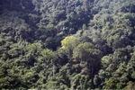 Borneo rainforest -- sabah_0300