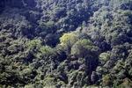 Borneo rainforest -- sabah_0301