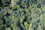 Borneo rainforest -- sabah_0304