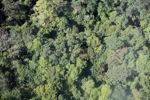 Borneo rainforest -- sabah_0305