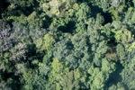 Borneo rainforest -- sabah_0306