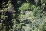 Small-holder deforestation