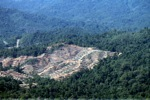 Loss of rainforest in Borneo