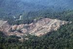Loss of rainforest in Sabah, Malaysia -- sabah_0311