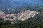 Loss of rainforest in Malaysia