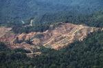 Chopping down rainforest in Malaysian Borneo -- sabah_0313