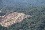 Chopping down rainforest in Sabah, Malaysia -- sabah_0315