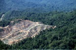 Chopping down rainforest in Malaysia -- sabah_0316