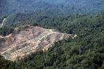 Deforestation in Malaysian Borneo