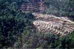 Deforestation in Borneo -- sabah_0318