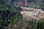 Deforestation in Sabah, Malaysia -- sabah_0319