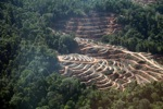 Lowland forest loss in Sabah, Malaysia