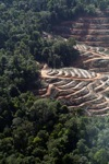 Loss of lowland rainforest in Malaysian Borneo