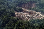 Loss of lowland rainforest in Borneo