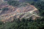 Loss of lowland rainforest in Malaysia
