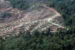 Chopping down lowland rainforest in Malaysian Borneo