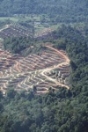 Chopping down lowland rainforest in Malaysia