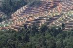 Deforestation in Sabah, Malaysia -- sabah_0335